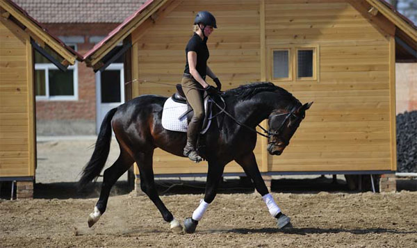 训练年轻马匹的4种稳健方法