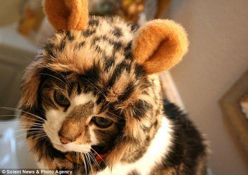 戴着新型头套的小猫咪。