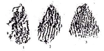 图3绳纹陶片拓本