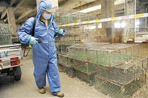 检疫人员给活禽交易区进行消毒