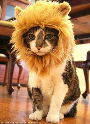 猫型创意 图片 店标