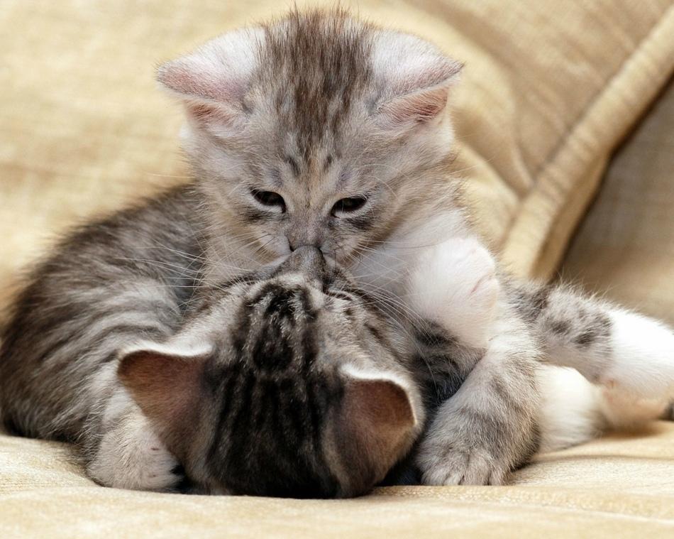 动物情侣温情接吻秀恩爱(组图)