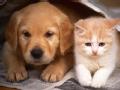 猫狗小可爱2