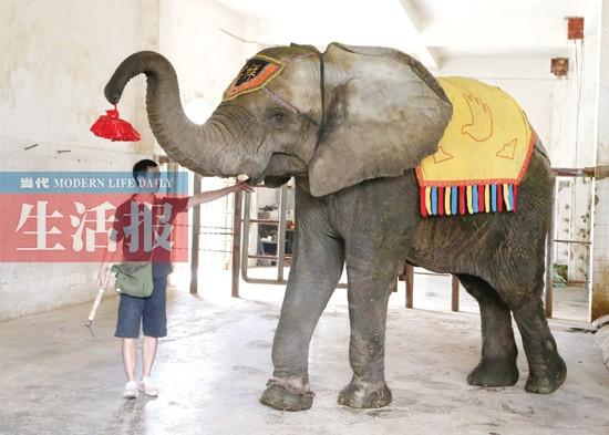 """非洲雌象:""""非非""""和""""洲洲"""",坐上车子,远赴北京,与北京动物园的一头雄象"""