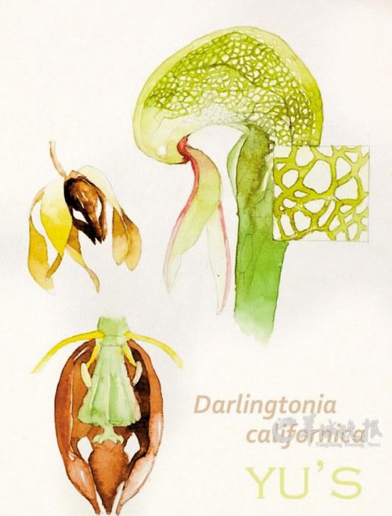 喵控成员余天一的植物手绘图