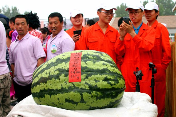 """今年的""""瓜王""""来自江苏淮阴农科所,重量达47.6公斤,创擂台赛举办以来""""瓜王""""之最。"""