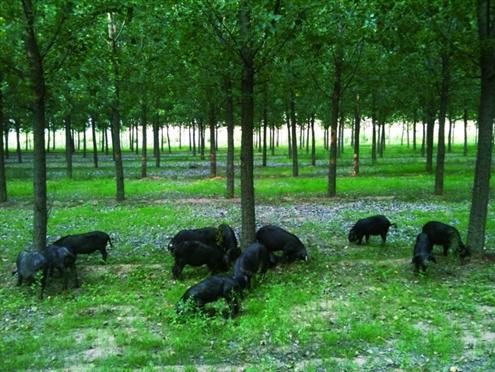 六一来黑猪快活林乐享多重免费大礼(组图)图片