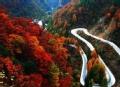 红松林事件 神秘伊春