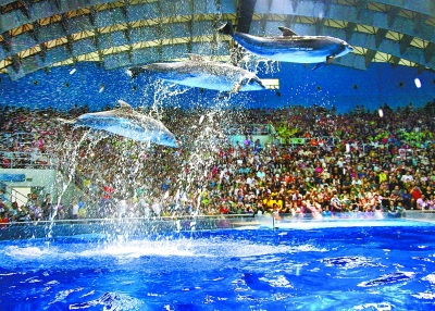 """极地海洋世界,动物的精彩表演让孩子们度过了一个快乐的""""六一""""儿童节."""