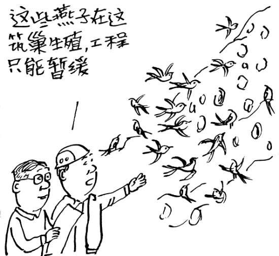 据郑州师范学院自然博物馆馆长李长看介绍,这些燕子是岩沙燕,属于候鸟