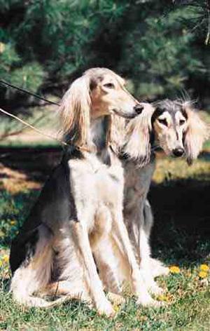 血堤犬_组图:北京市重点理区40种禁养犬-搜狐滚动