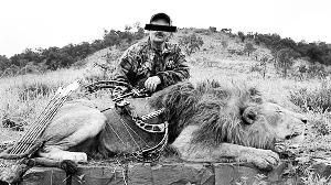 狩猎者在南非购买圈养的狮子,放在封闭区域以供猎杀