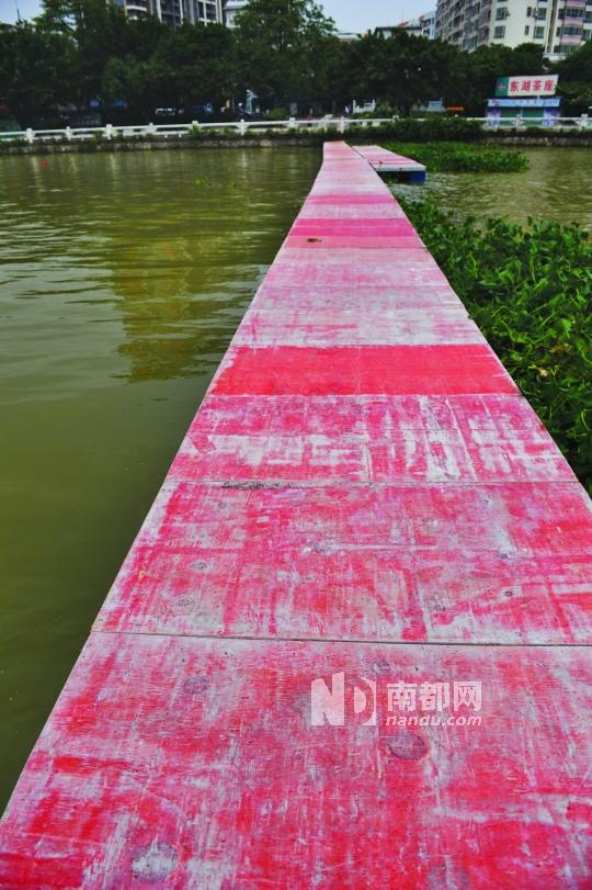 6月3日,一条几十米长的浮桥被搭建在西枝江面上。