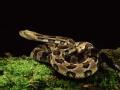 与蛇同眠(二)