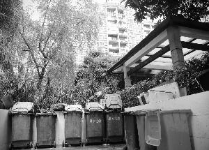 原本作为绿化带的地方现已围上铁栏圈成了垃圾回收站,摆满垃圾桶。