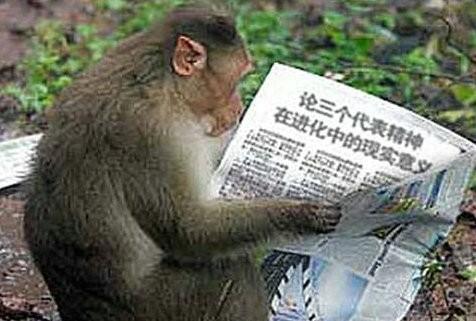 千奇百怪的动物_盘点猴子们千奇百怪的搞笑照片:俺老孙来也[组图](1)_科技频道 ...