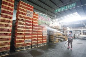 宁波市肉禽蛋批发市场,活禽交易区的工作人员对空置的鸡笼喷洒消毒水,为市场重新开放做准备