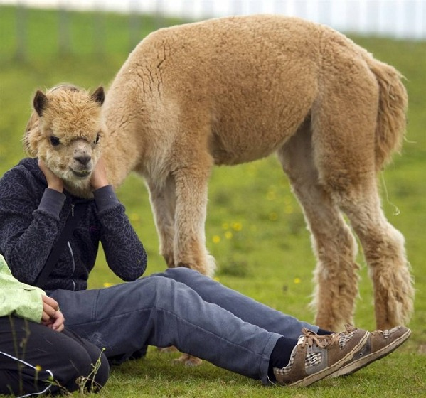 动物界爆笑表情帝:憨态可掬与人相似(组图)(1)_科学探索_光明网