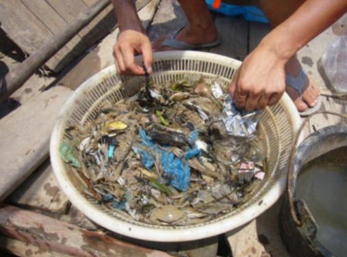从乐清湾打捞上来的垃圾