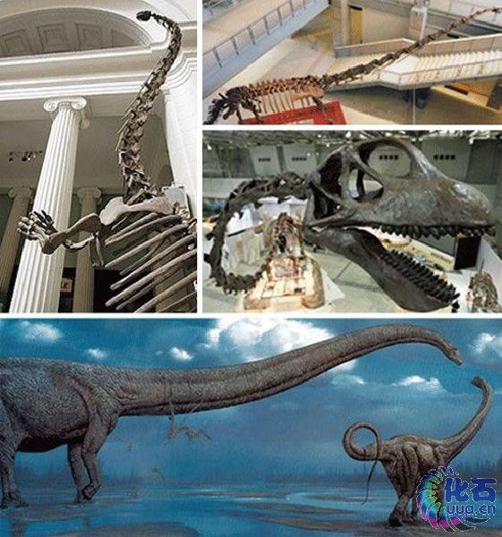 盘点十四种怪异动物:脖子很长的马门溪龙 图 1 科学探索 光明网 搜狐滚动