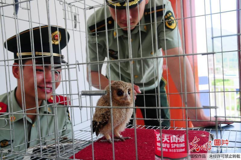 台州边防民警救助国家二级保护动物猫头鹰幼仔