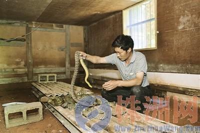最好的蛇房设计