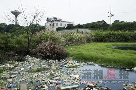 6月25日,开福区新港镇兴联村黄贯塘组,水塘漂着生活垃圾,发黑的水散发出阵阵恶臭味。图/记者谢长贵