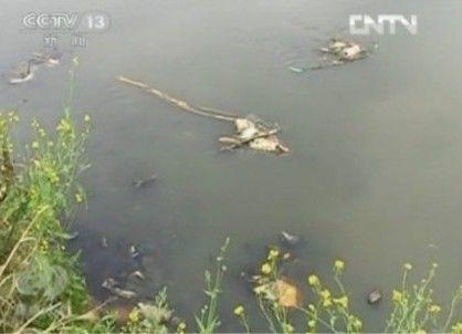 被污染的水库