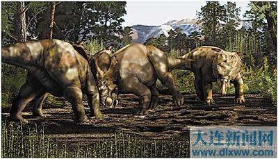大象头部骨骼结构图