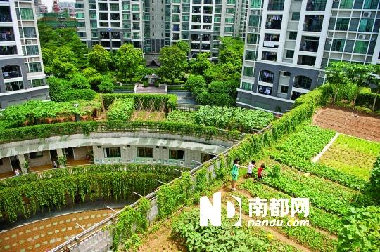 6月26日上午,东莞圣融生态幼儿园,外墙被爬山虎覆盖,绿意盎然.图片