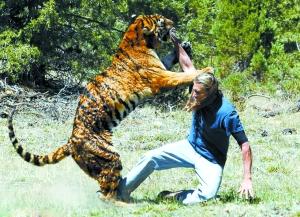 欧美人于兽_驯兽师与老虎玩耍心惊肉跳 普通人或早入虎口(组图)