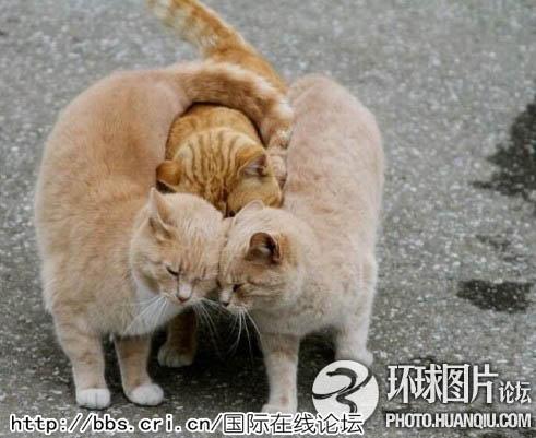 盘点全球搞笑动物图片集锦:大象也疯狂\/组图(1