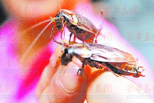 去除蟑螂的办法 灭蟑螂 天下无虫 除蟑螂
