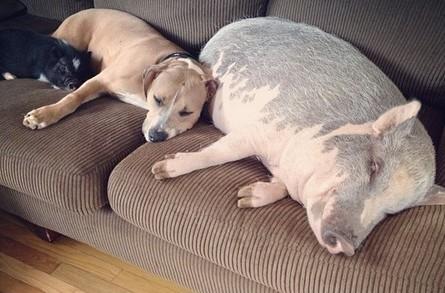女人与交狗_>> 文章内容 >> 和狗  女人真的可以跟狗做爱吗答:狗交是很享受的