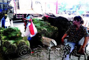 下午3点,商贩陈女士的韭菜还剩1200多斤没卖完。李榕 摄