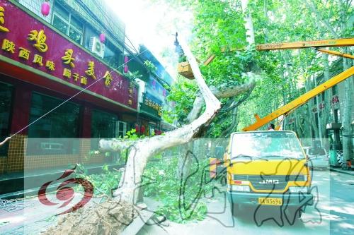 工人正在高空作业车上锯断法桐的树枝