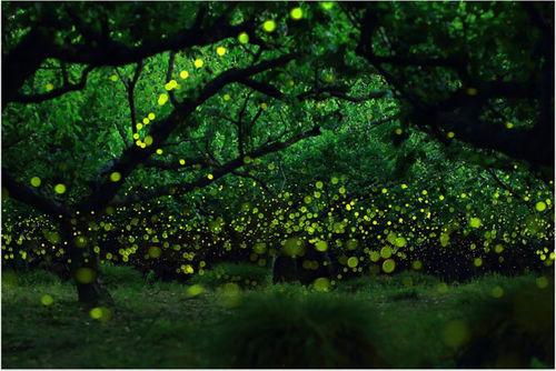 摄影师拍夏日萤火虫 仙女的最后之舞
