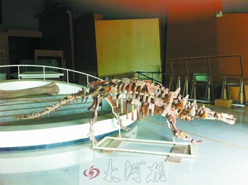 巨型汝阳龙_龙乡发现汝阳云梦龙化石 或诞生新名词汝阳动物群(组图)-搜狐滚动