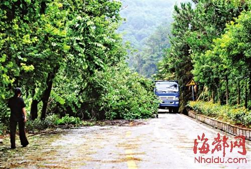 上鼓岭的路被倒下的大树堵住,车辆勉强通行