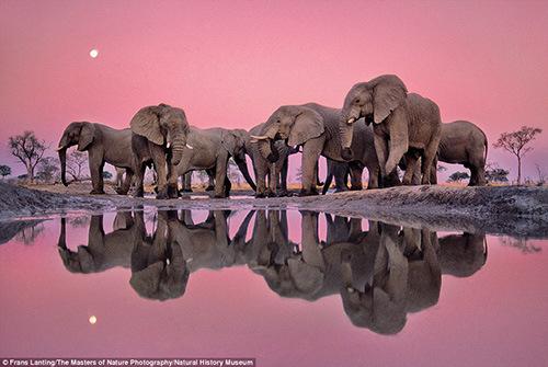 英出版动物摄影集锦 展现大自然野性之美(组图)