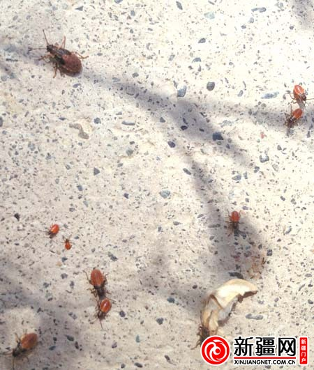 小区居民对战放屁虫军团(图)