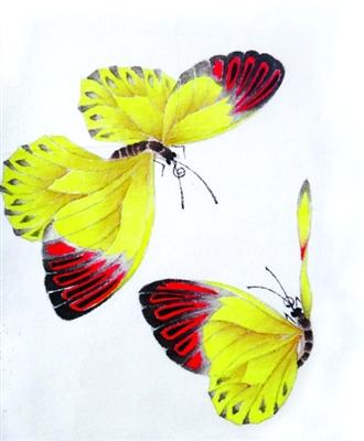 工笔蝴蝶高清