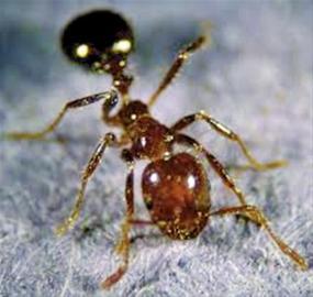 昆虫排行榜_科学家发布昆虫咬人痛感排行榜(图)