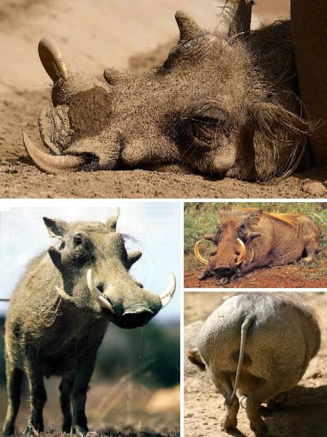 最奇怪的动物_图 世界上最奇怪的动物,各种你没见过的奇特动物 九州世