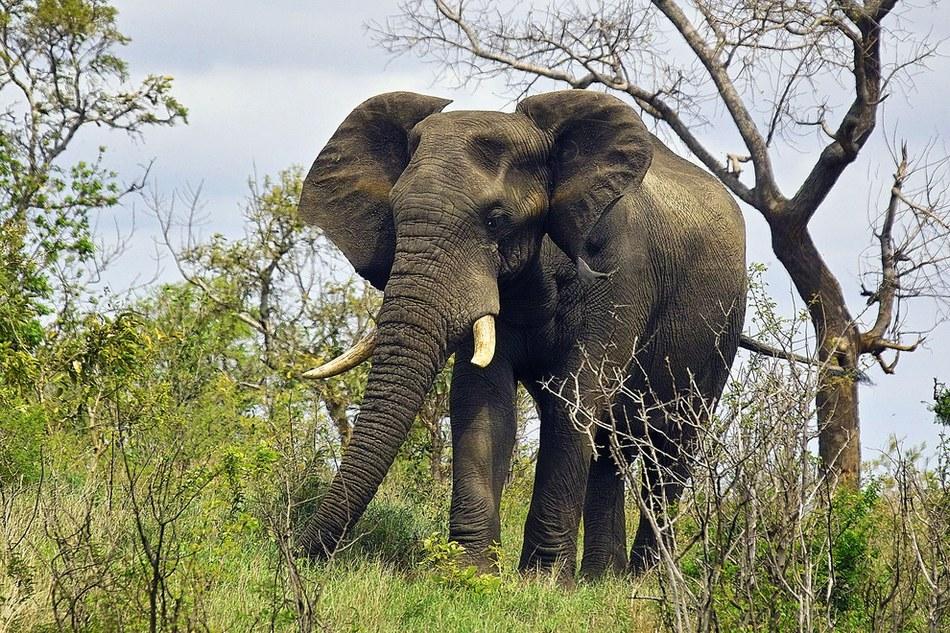 非洲大陆狂野的动物世界(组图)