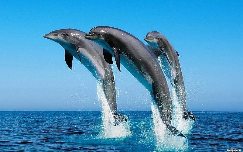 高智商海洋哺乳動物海豚:本領超群(組圖)(1)_科學探索圖片