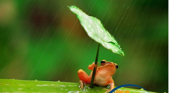 打伞树蛙系摆拍照走红 网友赞太可爱了(组图)