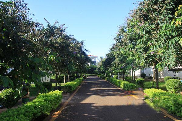 向阳村干净的街道,两旁果树林立.南海网见习记者刘麦 摄图片