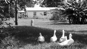 美国佛罗里达州奇迹村半数居民有性犯罪史