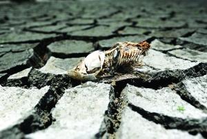 江西新余市分宜县操场乡太湖村一处因旱干裂的水塘河床出现干死的鱼(8月7日摄) 据新华社